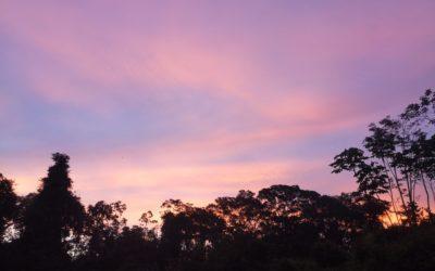 Razglednice iz Latinske Amerike – Džungla II deo