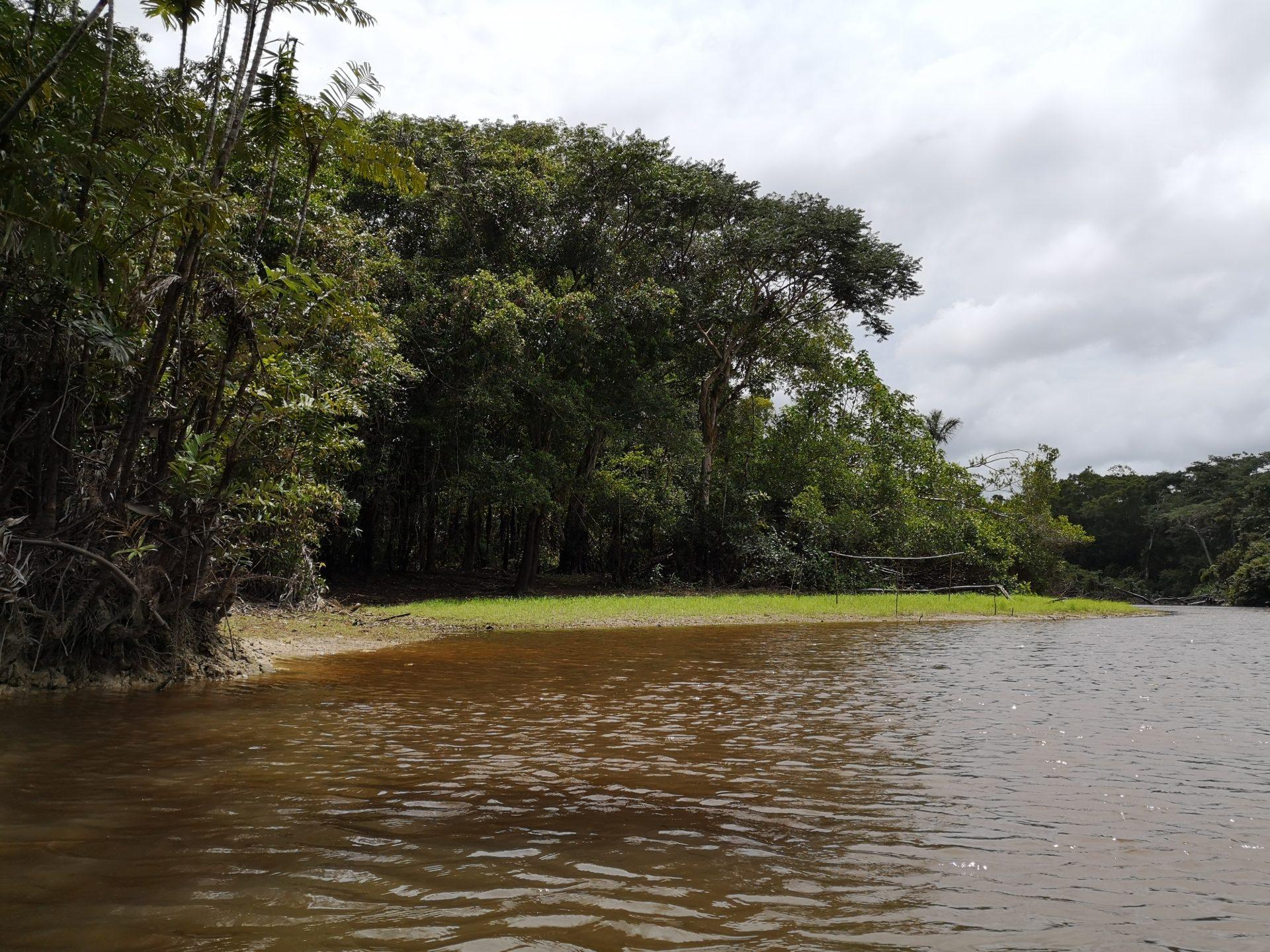 Razglednice iz Latinske Amerike – Džungla I deo