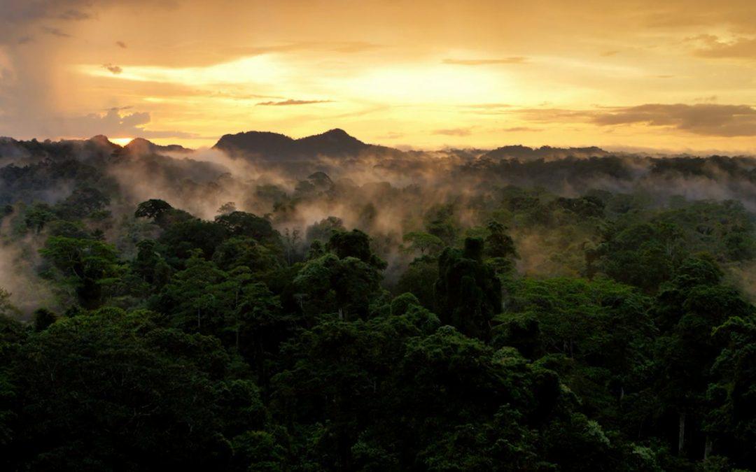 David Attenborough: A Life on Our Planet – film koji morate da pogledate